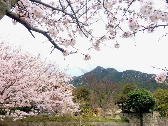桜2014.3,30-2