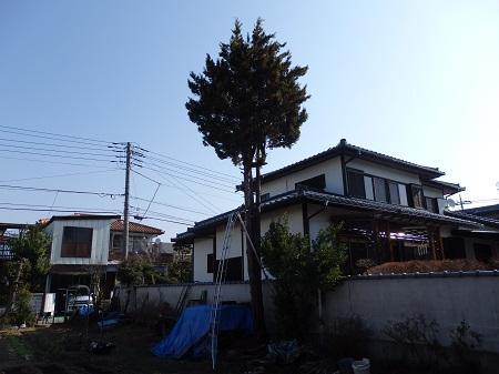 伐採と庭 002
