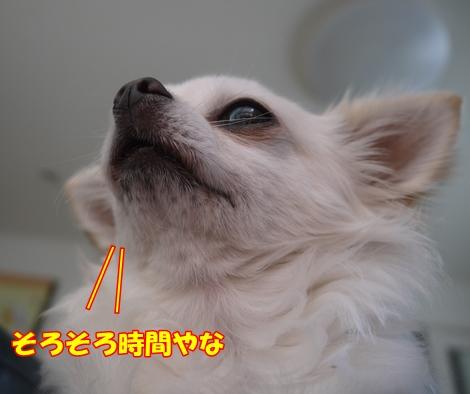 gf5P1170751.jpg
