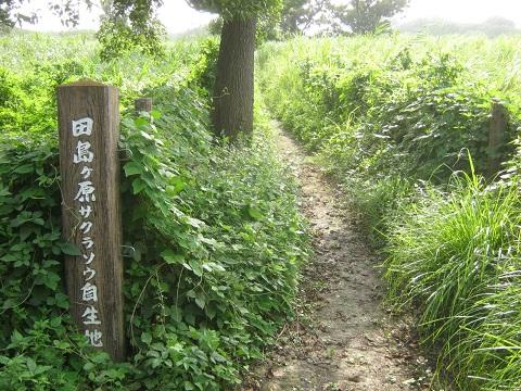sakurasou140817-107.jpg