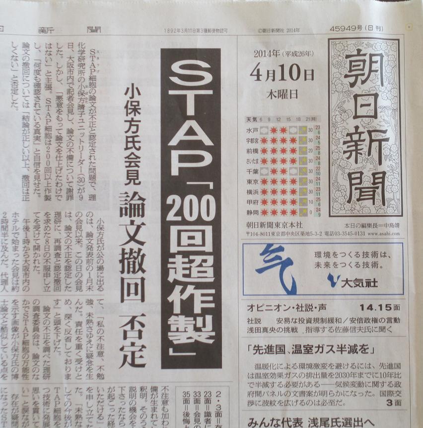 STAP 新聞