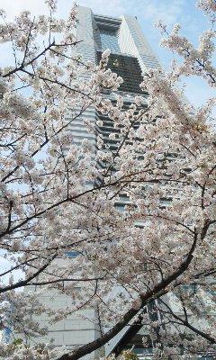 140402桜2