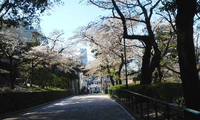 140404元町の桜1