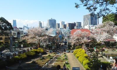 140404元町の桜3