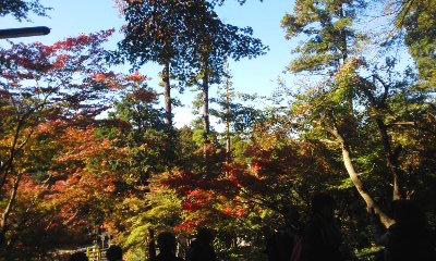141119鎌倉3