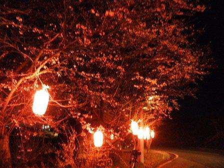 三林夜桜14042a