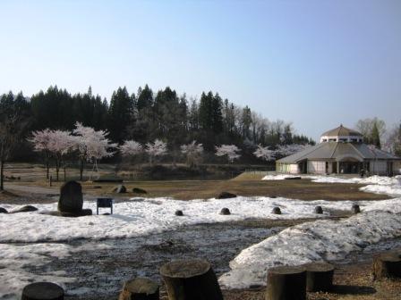 桜散策140425杜の森1