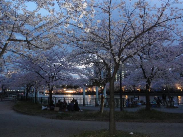 2014年4月2日 桜之宮公園1