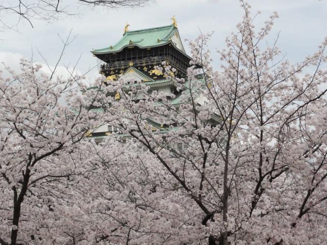 2014年4月3日 大阪城公園西の丸庭園 桜と天守閣
