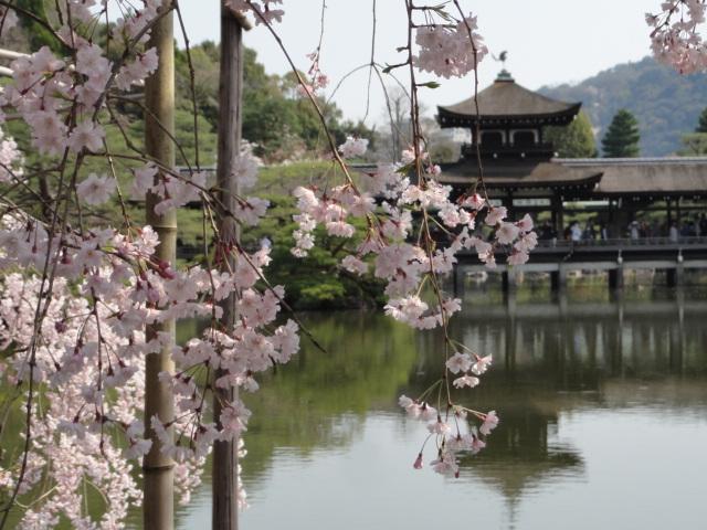 2014年4月8日 平安神宮 池と桜