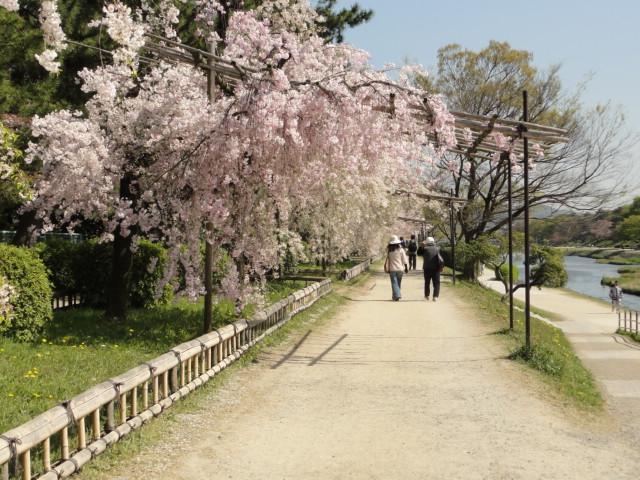 2014年4月15日 半木の道
