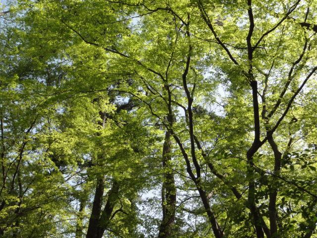 2014年4月15日 京都府立植物園 新緑