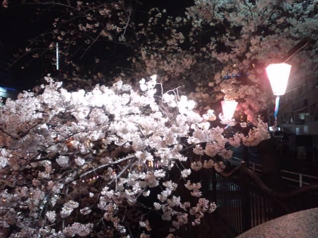 桜2014d