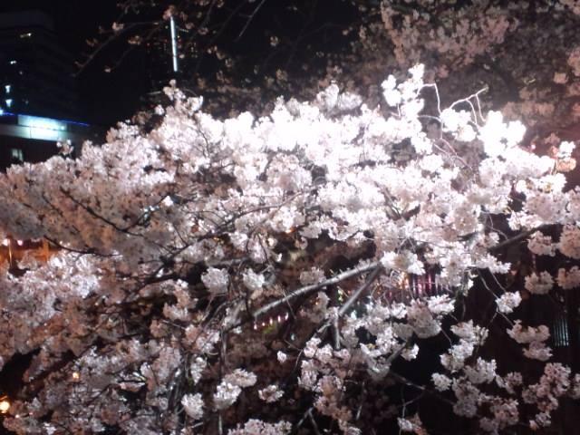 桜2014e