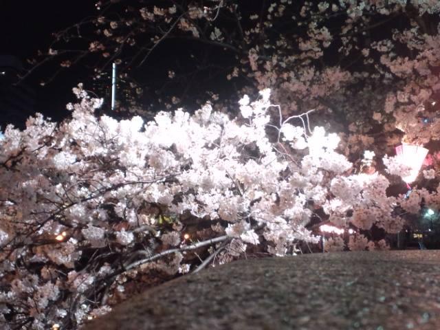 桜2014f