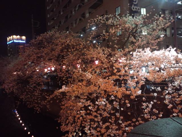 桜2014g