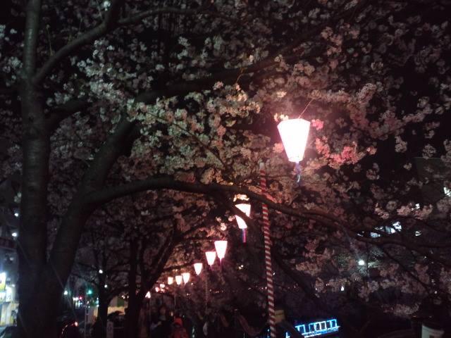 桜2014h