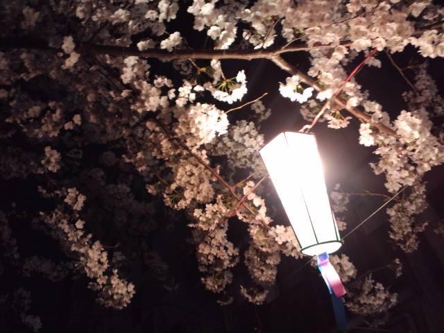 桜2014j