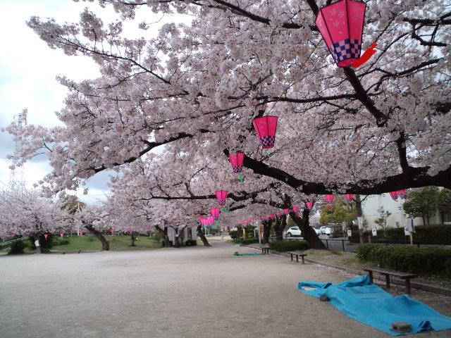 桜2014k