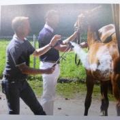 動物虐待シーン(馬)小画素