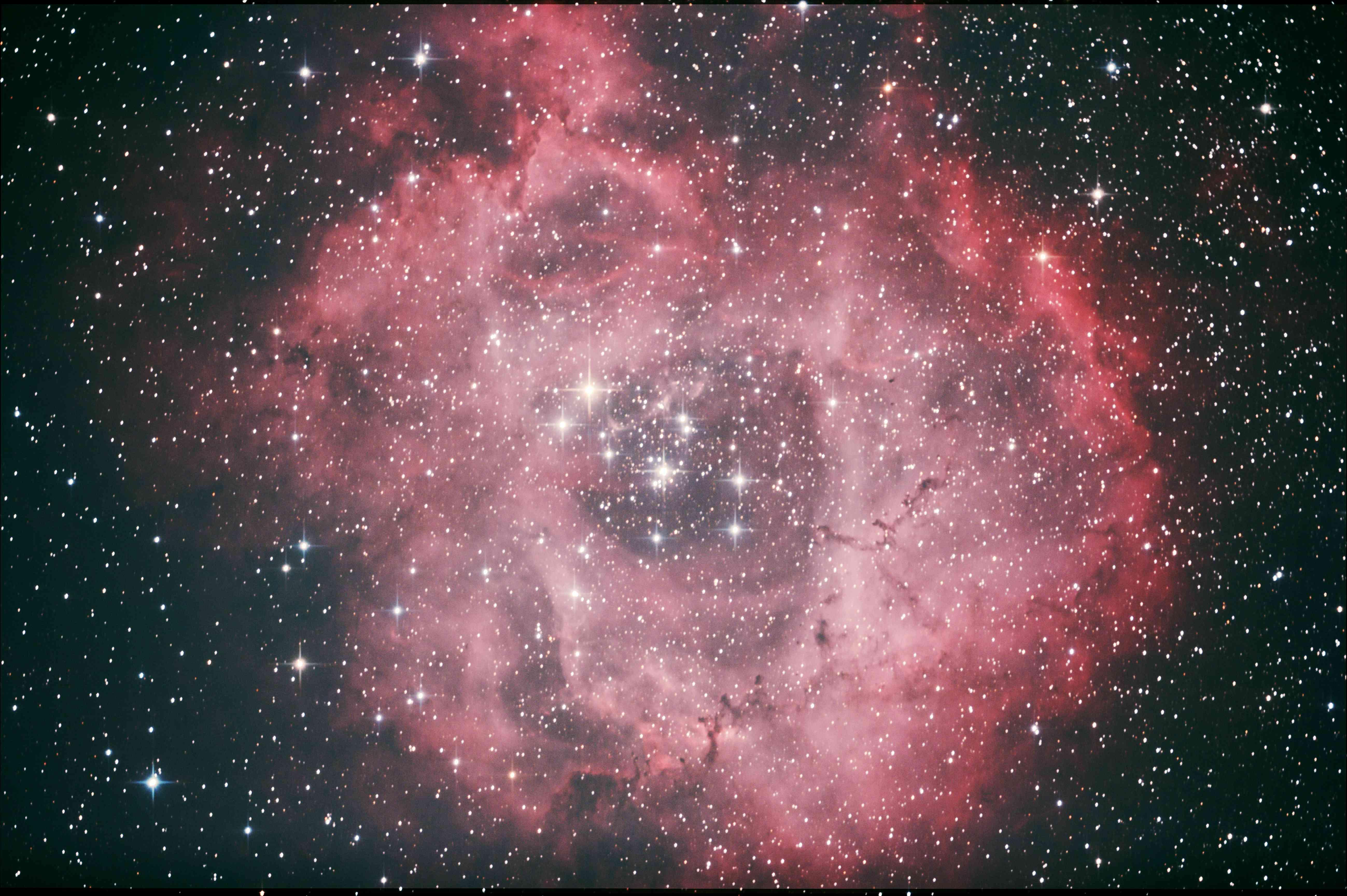 バラ星雲④