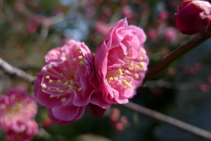 田村神社  讃岐国一宮  36