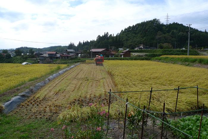 農作業 2014 コシヒカリ 稲刈り 1