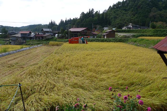 農作業 2014 コシヒカリ 稲刈り 2
