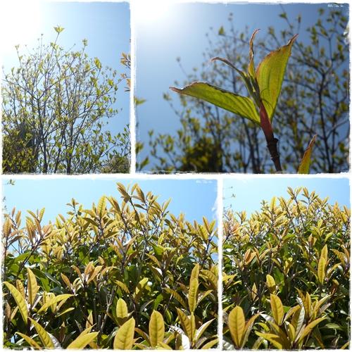 春の庭 ①