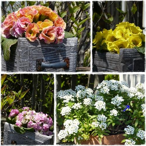 春の庭 ②