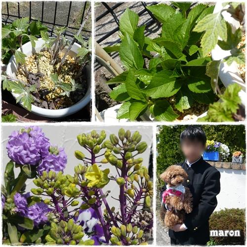 春の庭 ③