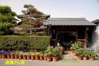 遠藤さん家の牡丹