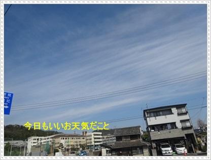 DSC06907.jpg