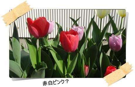 DSC07186.jpg