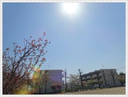 DSC07414.jpg