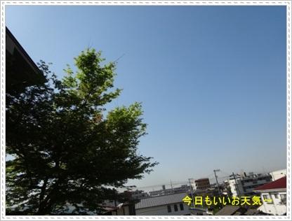 DSC07418.jpg