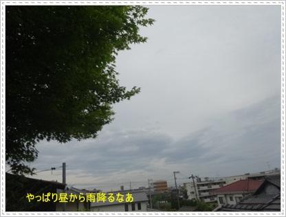 DSC08454.jpg