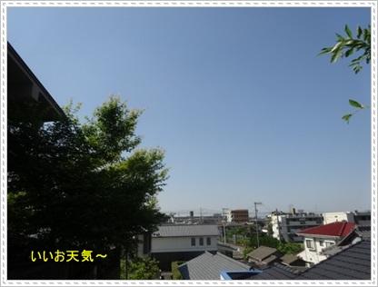 DSC08583.jpg