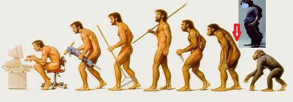 類人猿1d