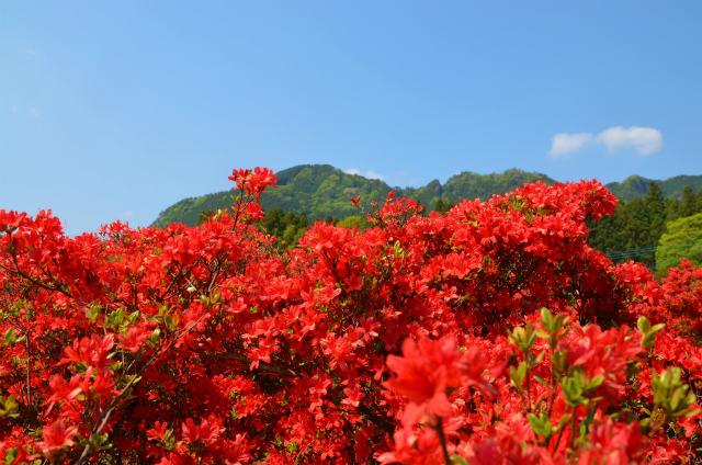 古賀志山2