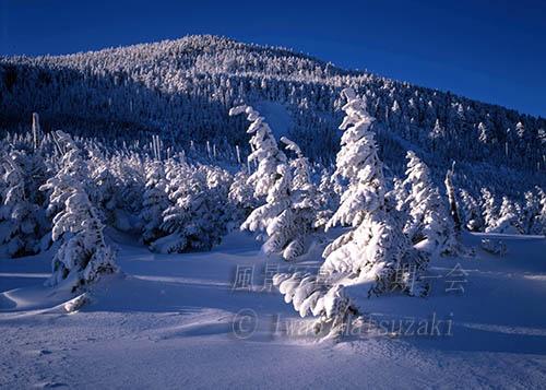 朝日の樹氷