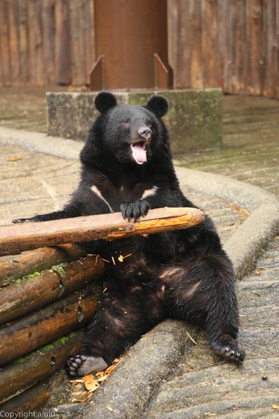 動物園 クマ 画像