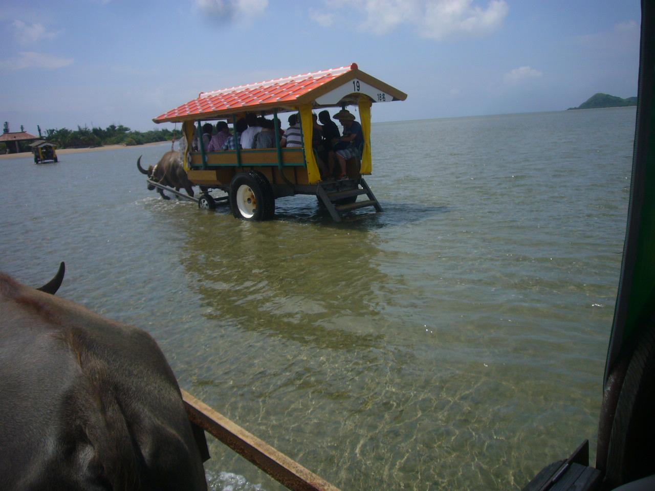水牛車で浅瀬を渡る H26.6.19撮影