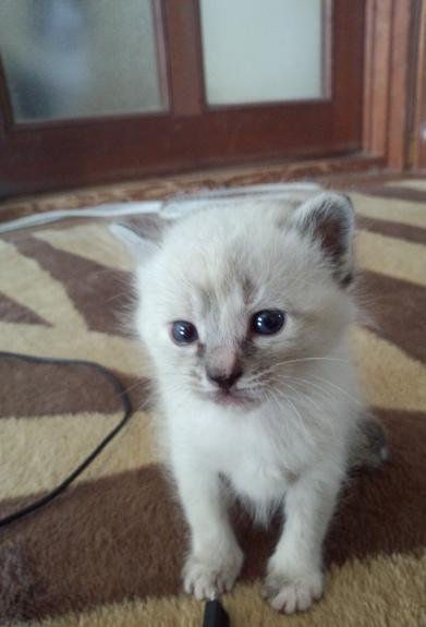 cutie.png