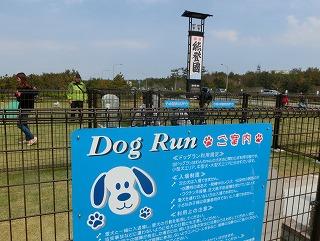 s-dogrunCIMG8902.jpg