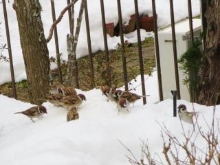 雪と鳥 (1)