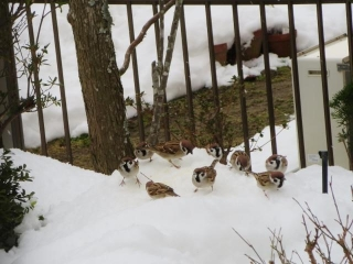 雪と鳥 (2)