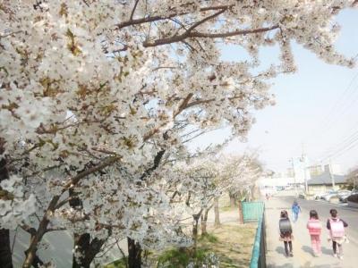 花の小学校