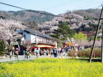 花見山 (7)