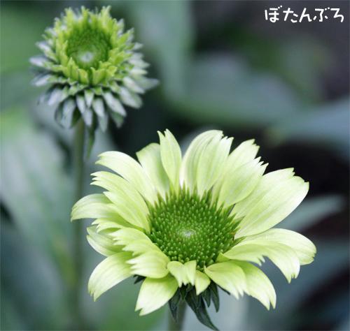 20140708_07.jpg
